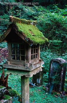 If I were a bird, and I think I am, I'd want to live here.