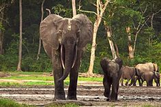 WCS.org - Wildlife Conservation Society