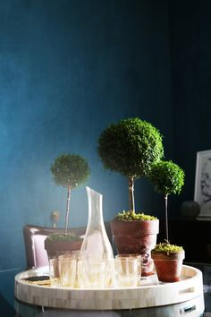 topiaries on a bar tray.