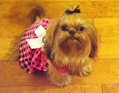 DIY Dog clothes from baby clothes tutorial