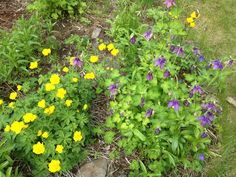 Here are some of the flowers from our perennial bed at our house in Two Rivers. These are my kind of flowers: no maintenance.