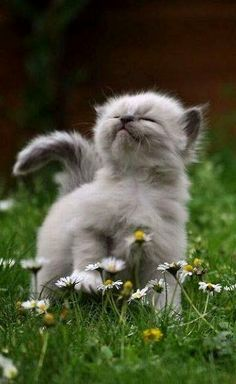"""""""Just smelling the flowers"""".."""
