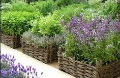 Herbs grown in baskets.