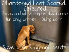 Adopt a shelter dog...please