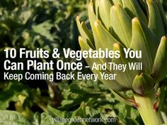 10_fruits_vegetables_ you can plantonce  and they willl keep coming back