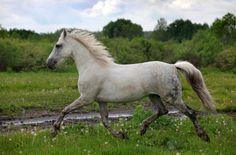 My own horse.