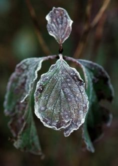 Frozen plants need careful winter gardening tips to survive