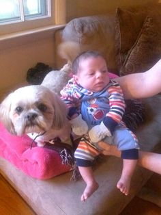 This rescue dog is the gentlest creature. And he loved this baby http://www.thestatenislandfamily.com