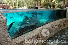 Issham Aquatics — Public, Commercial, and Residential Aquarium Construction and Maintenance