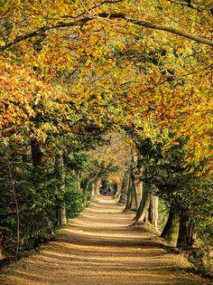 Addison's Walk, Magdalen College, Oxford by sdhaddow, via Flickr