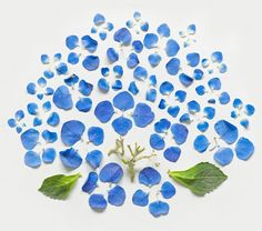 Qi Wei Exploded Flowers