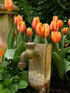 Bright tulips and water fountain