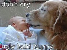 Don't cry, ugly bald puppy!