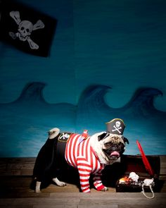 How-To: Pirate Dog Costume