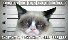 grumpy kitty - LOL