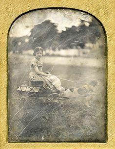dog cart, daguerreotyp portrait