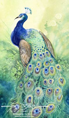 Art Print - Peacock by Stephanie Pui-Mun Law-Stephanie, Pui-Mun Law, gren, blue, bird, feather, feathers, peacock,,Art print, fine art print, print, archival, giclee, giclée