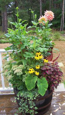 Perennial Passion: Whiskey Barrel Planter Comparisons & Flower Veggie Bouquet