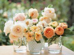 Variety of peach garden   roses