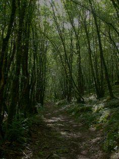 Les forets mysterieuses de Dordogne