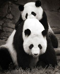 Image detail for -... from: Beautiful Black and White Photography of Animals | Inspiration