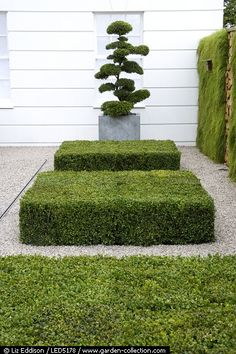 boxwood design #garden #green #landscaping