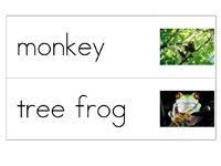 printable word cards for rainforest theme