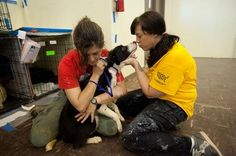 Easy Ways to Volunteer for Animals