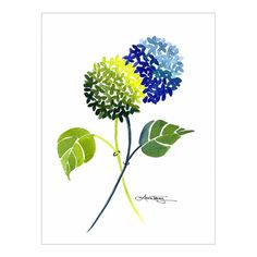 Blue and Green Hydrangeas Watercolor by Laura Trevey @ Bright Bold & Beautiful