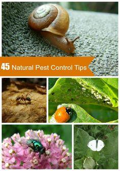 45 Tips For Natural Garden Pest Control