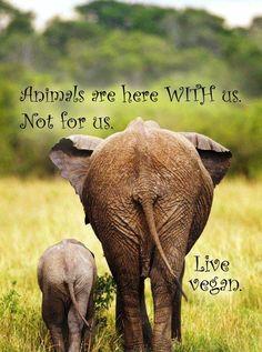 Live vegan.