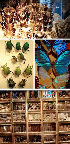 a butterfly collection