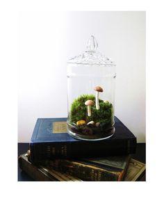 {Terrarium} Pocket world with mushrooms #garden #terrarium #plants #glass ❀✿