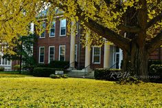 Asbury College Lexington KY - Bing Images     Loved our campus in the fall!  The colors changed and were so amazing!