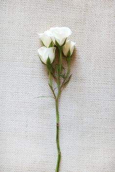 When planning on your wedding flowers, don't forget the spray roses! These charming little-bloomed roses look great in bridal bouquets, centerpieces as well as boutonnieres and corsages. Spray roses come in a wide variety of colors and are available year-round at GrowersBox.com.