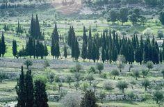 Garden of Gethsemane  http://urantiabook.org/jesus_photos/garden-of-gethsemane.html