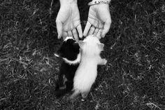 cutie kittens