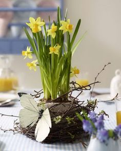 Delightful arrangement of Daffodils nestled in the sweetest nest!