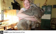 Ralph, the world's largest rabbit