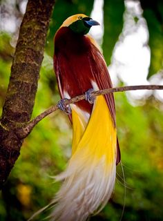 amazing birds | Amazing Birds of Indonesia