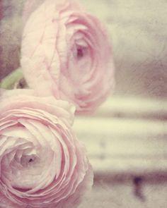 Pale Pink Flower Photograph - soft beautiful dreamy texture ranunculas garden. $30.00, via Etsy.