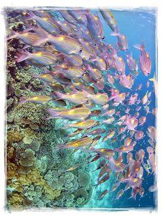 #Maldives #fish #marine #reef