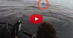 Killer Whales Circled Their Boat - Suddenly, They Noticed Something IN Their Boat!! WOW!