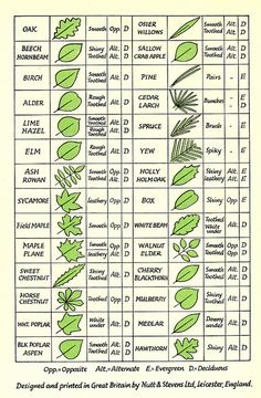 Leaf Identification great for drawing leaves in Art