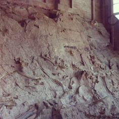 In 1909, 20 miles east of Vernal, paleontologist Earl Douglass discovered a 200-foot-long sandbar layered with prehistoric plant and animal fossils. A new quarry visitor center protects more than 1,500 dinosaur bones left exposed in the sandstone wall. Beyond the quarry, the monument offers trails, tours and activities which highlight the area's unique geology, history, wildlife and rugged beauty. The Split Mountain and Green River Campgrounds are located near the Quarry Visitor Center. 435-781-7700, www.nps.gov/dino