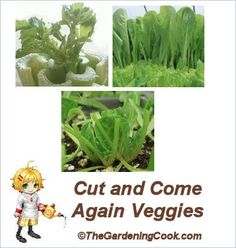 Cut and come Again Vegetables - Extend your vegetable harvest all season.  http://thegardeningcook.com/cut-and-come-again-vegetables/