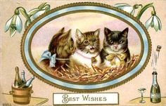 A very Kitty New Year to all!