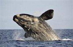 World Bank issues SOS for oceans, backs alliance.
