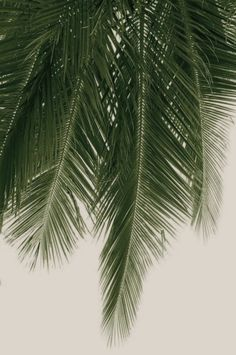 Summer palm fronds - via Tumblr