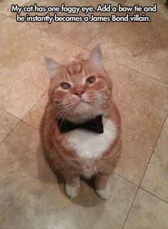 Bond villain cat
